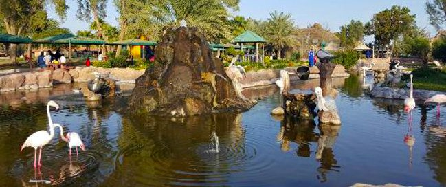 Check the Bahraini wildlife: Al Areen Wildlife Park & Reserve