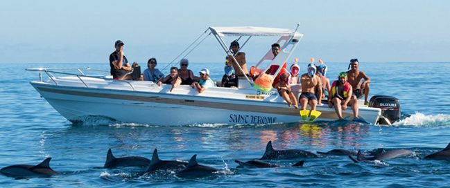 Swimming with the dolphins in Port Louis, Mauritius