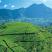 تلال خضراء سريلانكا