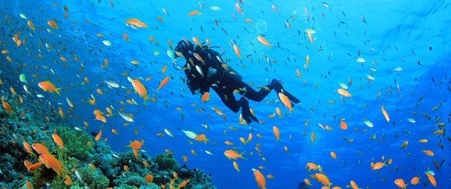Scuba diving in Marsa Alam, Egypt