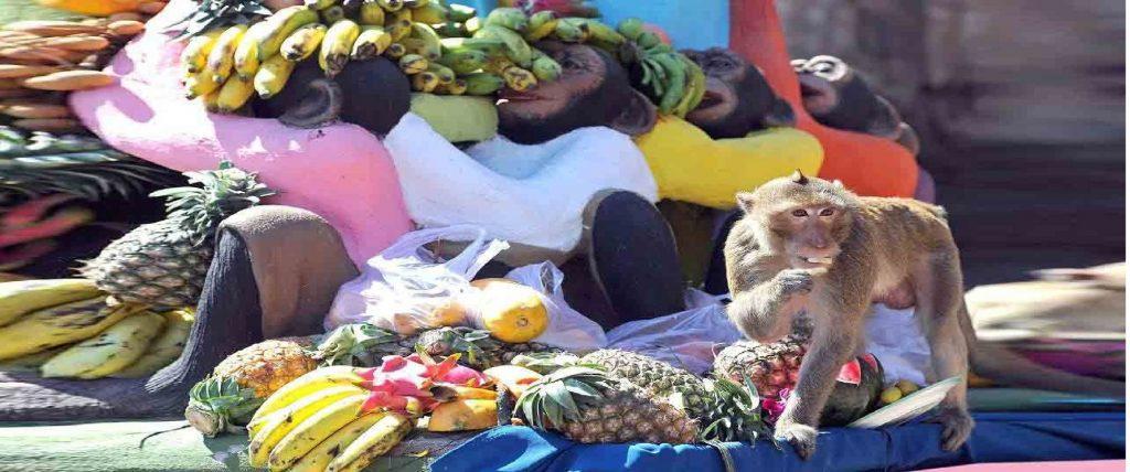 مهرجان وليمة القرود، تايلاند