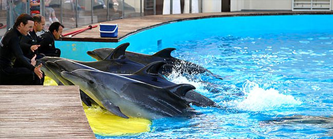 Visit Fakieh Aquarium