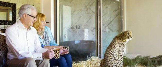 الحياة البرية - فندق الحياة البرية