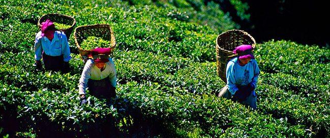 India: Best tourism places to visit - Darjeeling