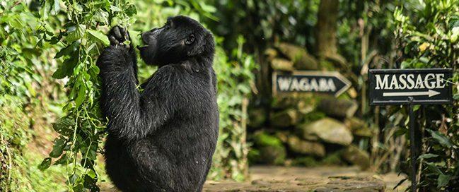 الحياة البرية - بويند لودج