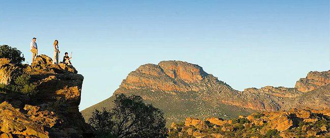 Discover Wildlife - Bushman's Clovis