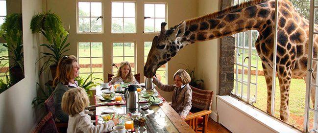 الحياة البرية - فندق الزرافات