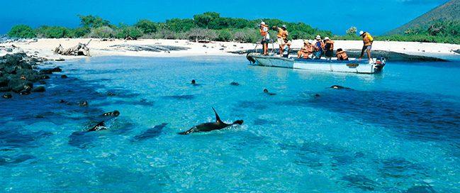 الحياة البرية - جزر غالاباغوس