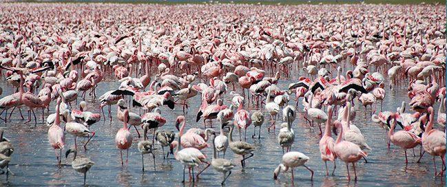 Discover Wildlife - Hypo Point - Nakuru