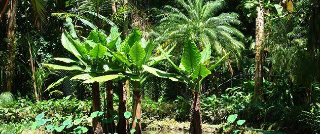 جزر هاواي - التمتع بالمناظر الطبيعية بحدائق ايميا
