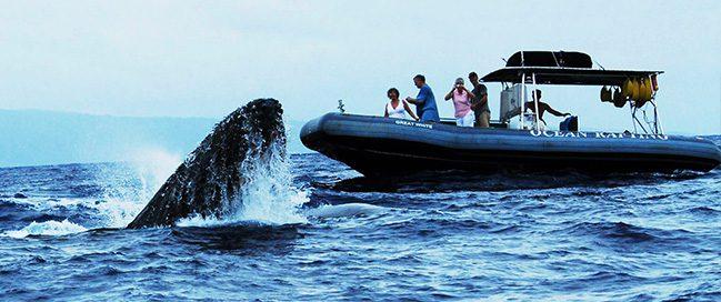 جزر هاواي - مشاهدة الحيتان