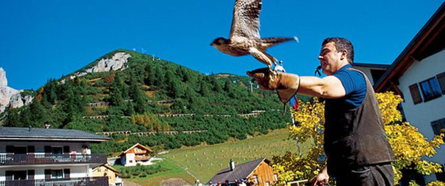 Enjoy nature at The Galina Falconry Center