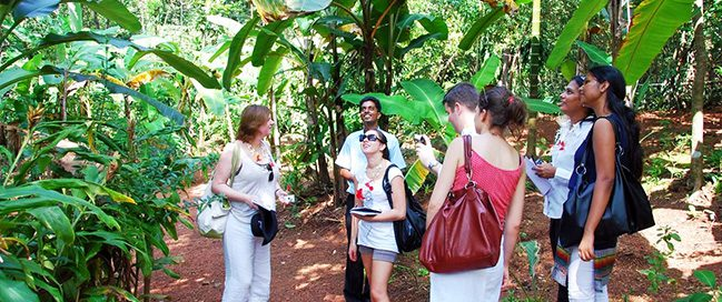 Take a tour in a spice plantation