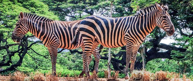 جزر هاواي - التجول في حديقة الحيوان