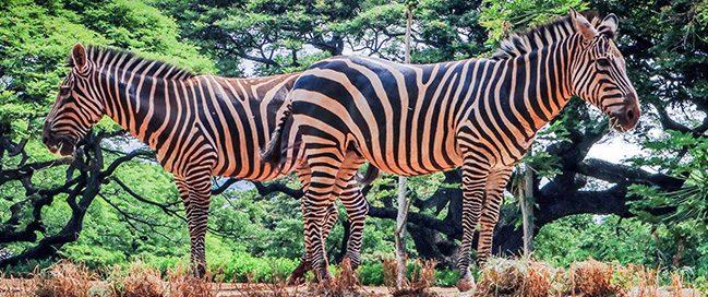Hawaii - Walk around the zoo