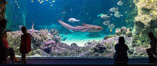 Top places to visit in Sydney - Sydney Aquarium