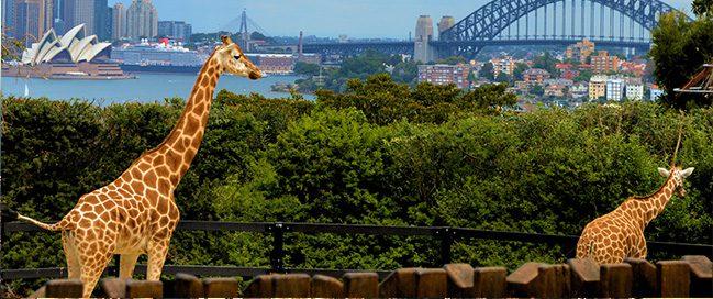السياحة في سيدني - حديقة حيوان تارونجا
