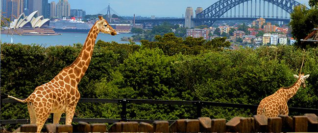 Top places to visit in Sydney - Taronga Zoo