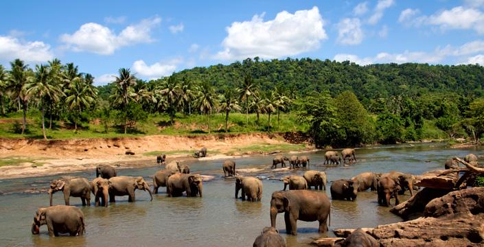 Srilankan jungle
