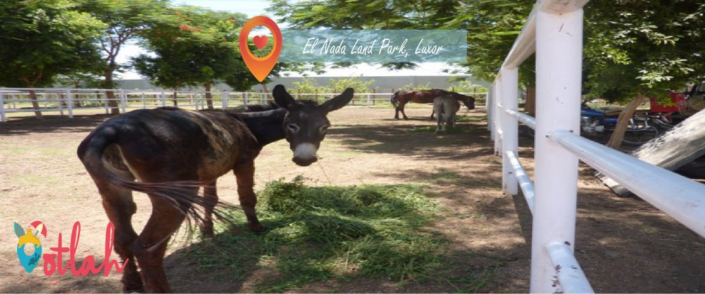 Things to do in Luxor - EL Nada Land Park