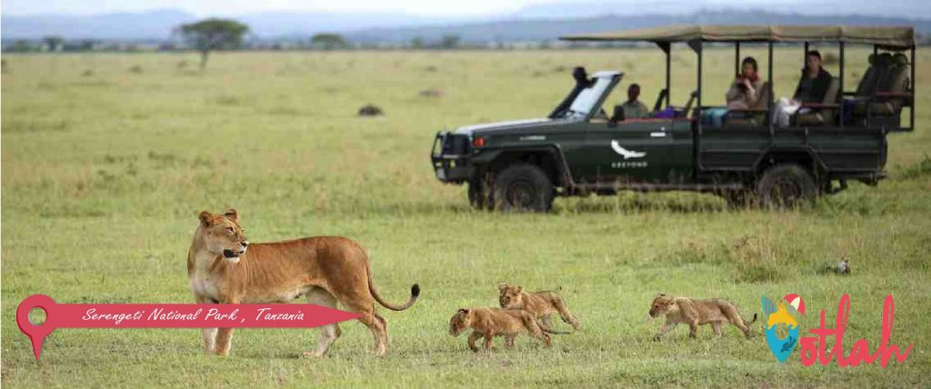 Best Safari jeep tours