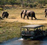 رحلات سفاري متنوعة بين الحياة البرية والصحاري الخلابة