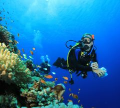 Learn scuba diving in 2 days with PADI