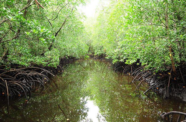 غابة جوزاني