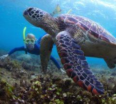 رياضة الغوص في جزيرة جرادا
