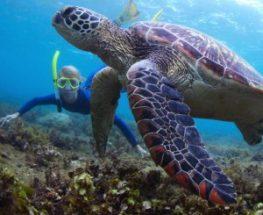 Snorkeling in Jarada island