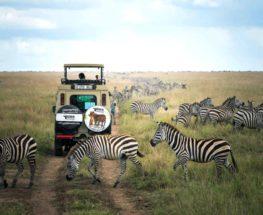 8 أيام سفاري في تنزانيا