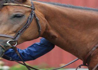 ركوب الخيل: أفضل جولات ركوب الخيول حول العالم