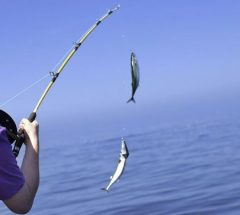 Fishing adventure in Bahrain