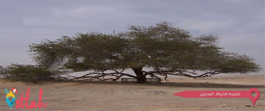 معالم البحرين الاثرية - شجرة الحياة