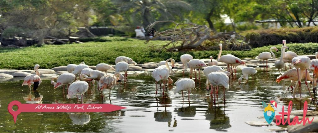 Al Areen Wildlife Park