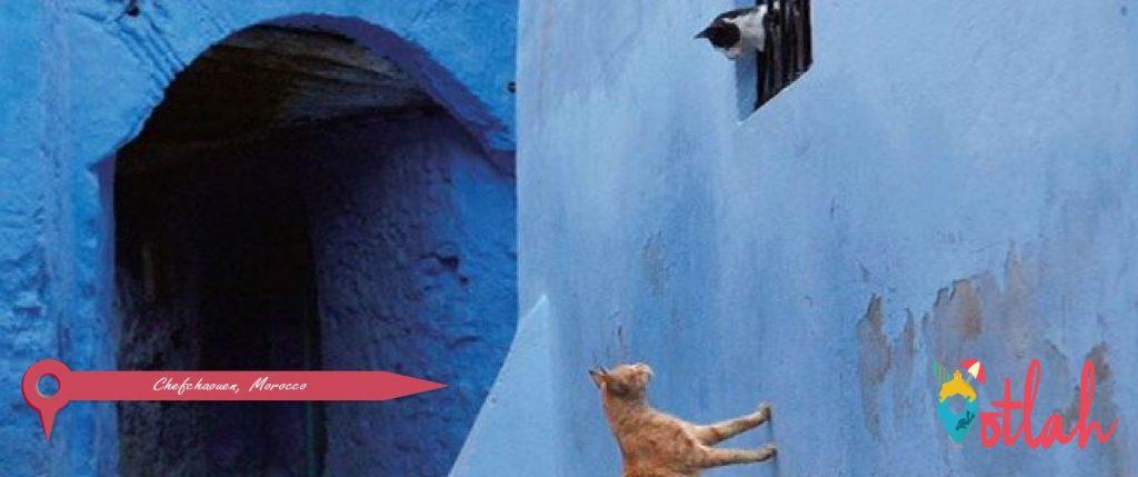 Go Cat Spotting