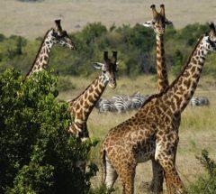 Naivasha , Kenya