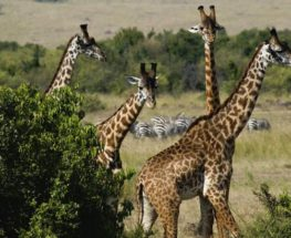 نايفاشا، كينيا