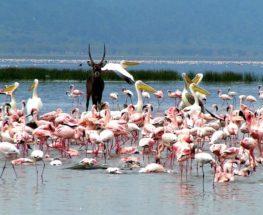 بحيرة ناكورو