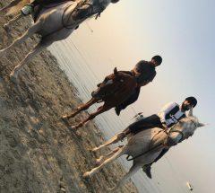Horse riding in Bahrain