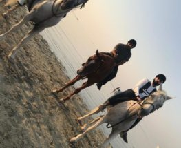 Horse riding in Bahrain