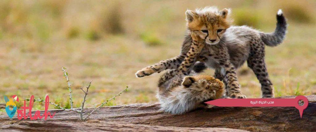 محب الحياة البرية