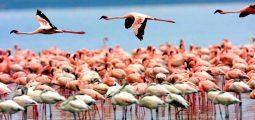 See the Highlights of Tanzania- Safari for 6 Days/ 5 Nights