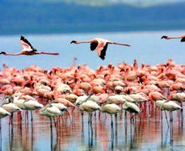 قم بزيارة أبرز معالم تنزانيا- سفاري لمدة 6 أيام / 5 ليال