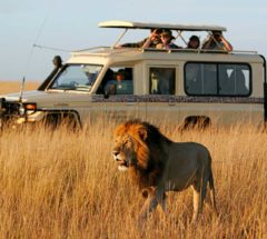 6 Days/ 5 Nights Best of Kenya, Masai Mara Interactive, Lake Nakuru & Amboseli Safari