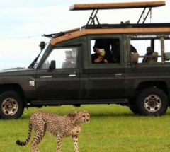 Interactive Safari to Masai Mara Reserve in Kenya for 3 Days and 2 Nights