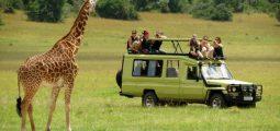 Enjoy 4 days of safari tour in Serengeti & Ngorongoro