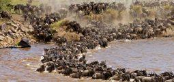 10 Days in Kenya and Tanzania