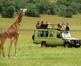 Enjoy 4 days of safari tour in Serengeti & Ngorongoro