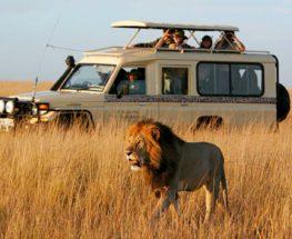 كينيا 6 أيام و 5 ليال زيارة محمية ماساي مارا، وبحيرة ناكورو و سفاري في أمبوسيلي